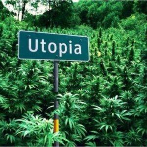 Legalizzazione cannabis in Italia, a che punto siamo?