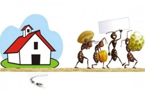 Rimedi naturali contro le formiche come allontanarle for Rimedi naturali contro le formiche bicarbonato