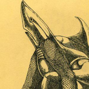 Pesci – Lo Zodiaco nelle illustrazioni grafiche