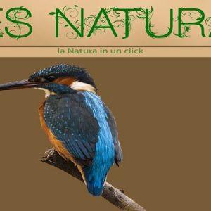 res naturae
