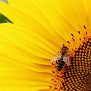 Nature Weed Control: è italiano il primo eco-diserbante