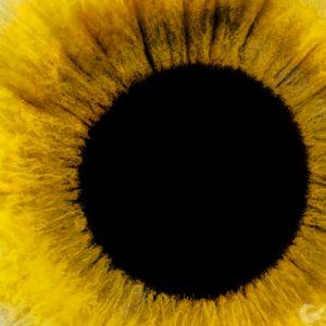 Oltre il buio: Blind Vision per l'Istituto Colosimo di Napoli