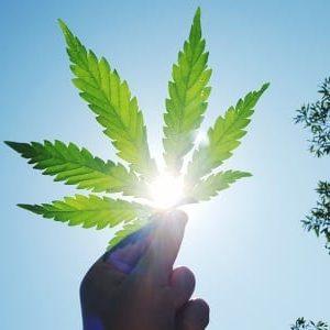 Legalizzazione marijuana e cannabis, a che punto siamo in Italia?