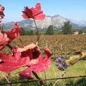 Degustazione a Galluccio: alla scoperta dei vini campani