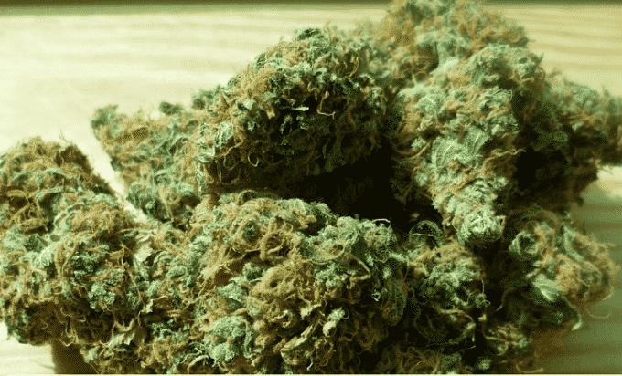 Marijuana legale, dove e quando ne è consentito l'uso