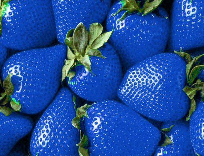 fragole blu