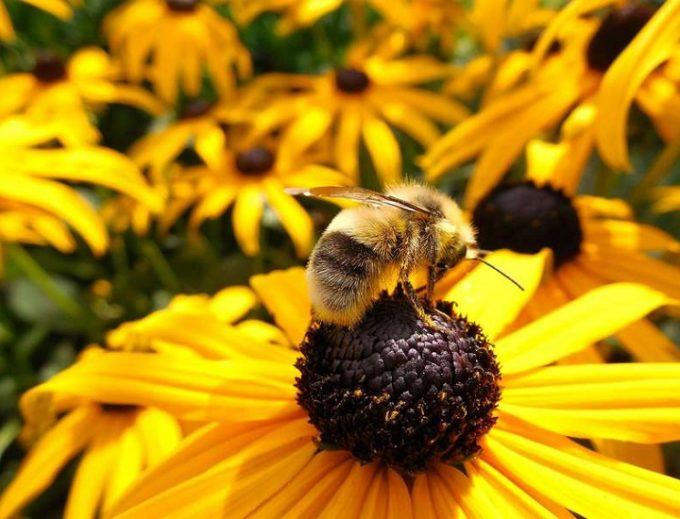 Moria delle api: i rischi per l'ecosistema