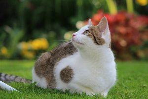 Il misterioso mondo felino. Le razze di gatti più comuni