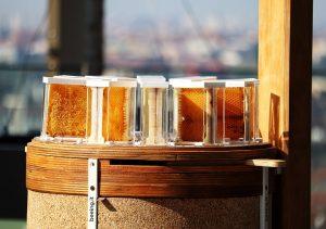 Beeing e l'apicoltura urbana   Intervista a Roberto Pasi