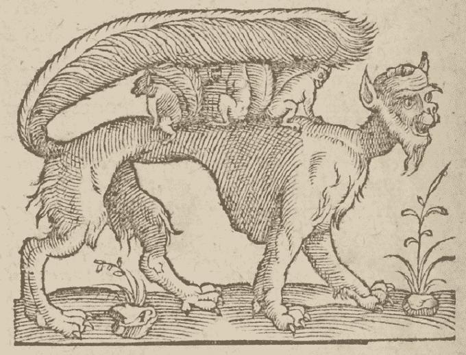 Criptozoologia: animali nascosti e dove trovarli
