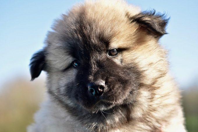 Come vedono i cani: quali sono le differenze col suo padrone