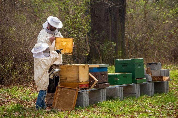 Come la Slovenia sta salvando le api
