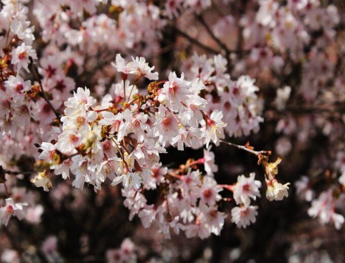 Primavera: tre poesie italiane per celebrarne la bellezza
